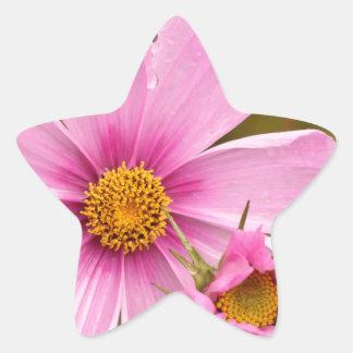 Flores rosadas phtographed por Tutti Pegatina En Forma De Estrella