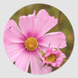 Flores rosadas phtographed por Tutti Pegatina Redonda