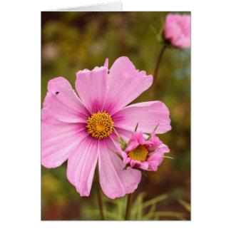 Flores rosadas phtographed por Tutti Tarjeta De Felicitación