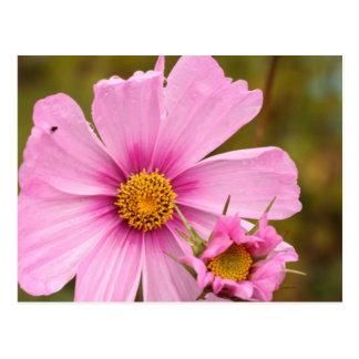 Flores rosadas phtographed por Tutti Tarjetas Postales