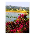 Flores rosadas postales