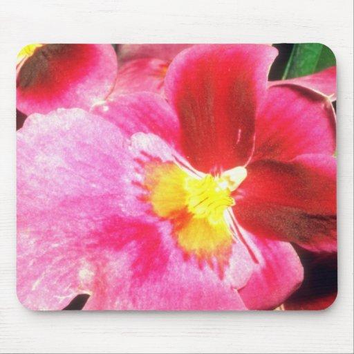 Flores rosadas rosadas de la alegría tapetes de raton