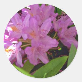 Flores rosadas sombreadas del racimo de la azalea pegatina redonda