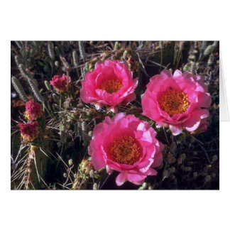 Flores rosadas felicitacion