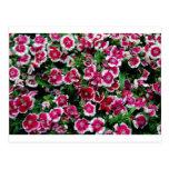 Flores rosadas tarjeta postal