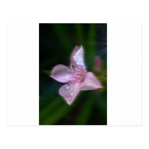 Flores rosadas tarjetas postales
