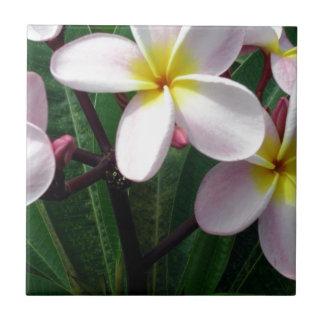Flores rosadas y amarillas dulces del Plumeria Azulejo Cuadrado Pequeño