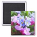 Flores rosadas y azules de la primavera iman para frigorífico