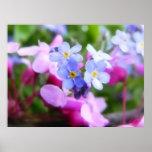 Flores rosadas y azules de la primavera poster