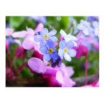 Flores rosadas y azules de la primavera tarjetas postales