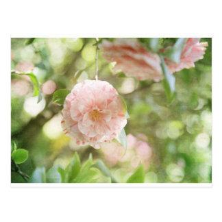 Flores rosadas y blancas de Camillia en las flores