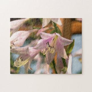 Flores rosadas y blancas del Hosta Puzzle