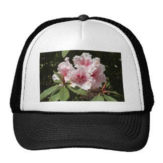 Flores rosadas y blancas del rododendro en la flor gorro