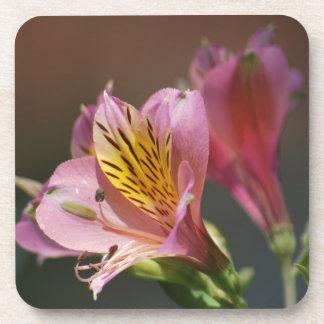 Flores rosadas y significado del lirio del inca posavasos