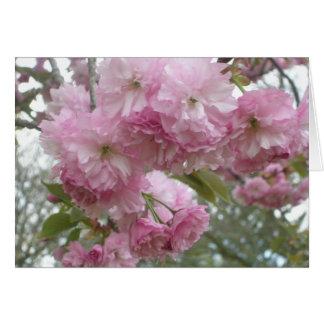 Flores Rosado-Franjados Tarjeta De Felicitación