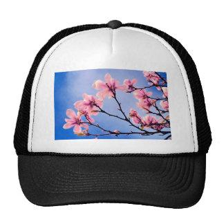 Flores rosados contra el cielo azul gorras