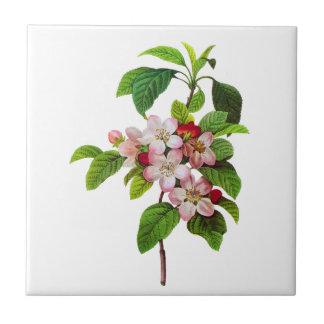Flores rosados de Apple de Pedro Jopseph Redoute Azulejo Cerámica