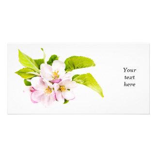 Flores rosados de la manzana tarjeta fotográfica