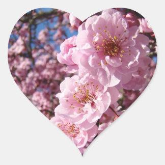 Flores rosados del árbol de la primavera de los pe