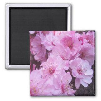 Flores rosados del melocotón imán cuadrado