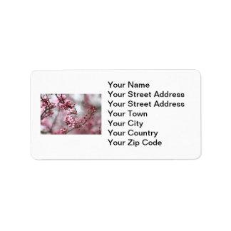 Flores rosados en foto de la primavera etiqueta de dirección