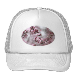 Flores rosados en foto de la primavera gorra