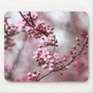 Flores rosados en foto de la primavera mousepads