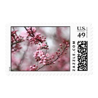 Flores rosados en foto de la primavera envio