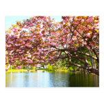 Flores rosados en la plena floración postal