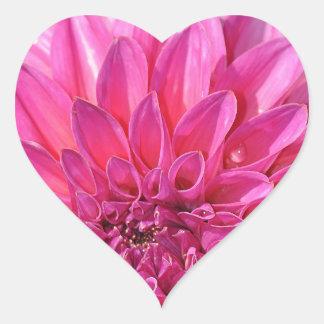 Flores rosados hermosos de la flor de la dalia pegatina en forma de corazón
