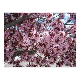 Flores rosados postal