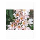 Flores rosas claras/blancas tarjetas postales