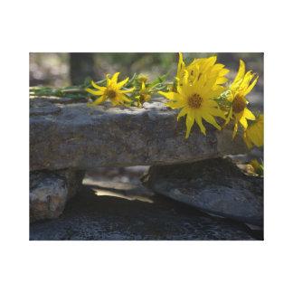 Flores salvajes amarillas de Tejas Impresion De Lienzo