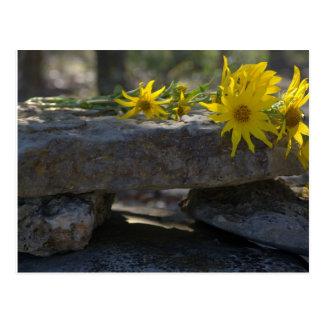 Flores salvajes amarillas postales