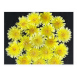 Flores salvajes amarillas tarjeta postal