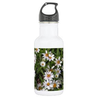 Flores salvajes blancas de la flor de la margarita