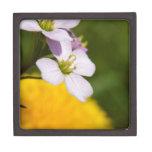 Flores salvajes caja de regalo de calidad