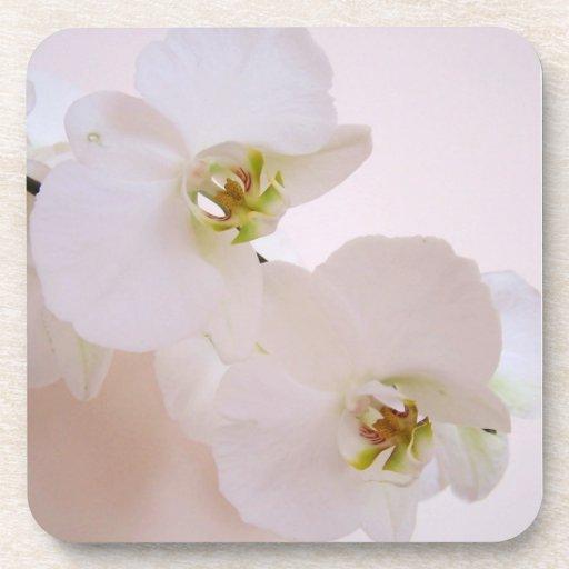 Flores salvajes de la orquídea del Phalaenopsis en Posavasos De Bebida