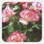 Flores salvajes de los rosas calcomanía cuadradas personalizadas