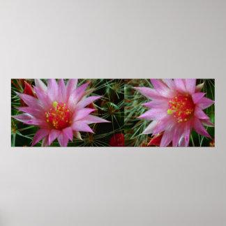 """"""" flores salvajes del CACTUS 36x12: Energía positi Impresiones"""