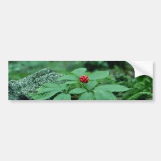Flores salvajes del Ginseng (Panax Quinquefolius) Pegatina Para Auto