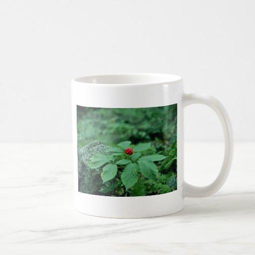 Flores salvajes del Ginseng (Panax Quinquefolius) Tazas De Café