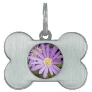 Flores salvajes placas mascota
