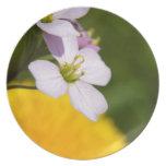 Flores salvajes platos de comidas