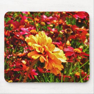 Flores salvajes rosadas amarillas y brillantes
