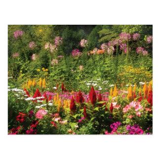 Flores salvajes postal