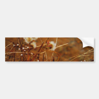 Flores secadas crema lateral del lago etiqueta de parachoque