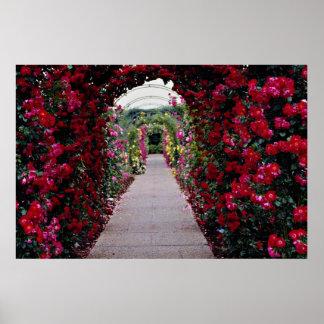 Flores subiós de los arcos que suben póster