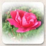 flores subiós del rosa salvaje posavaso