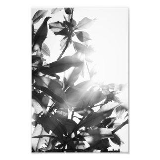 Flores Sun y monocromo Arte Con Fotos
